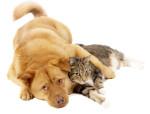 J'ai testé une assurance santé pour animaux de compagnie