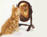 chat lion horoscope lion 2013