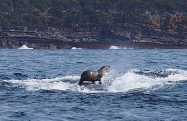 phoque surfe baleine - revue de presse