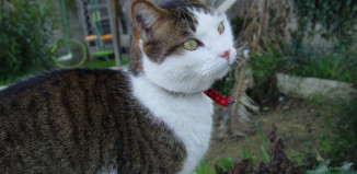 longlong un chat pas comme les autres